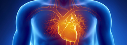 cardiology-icon